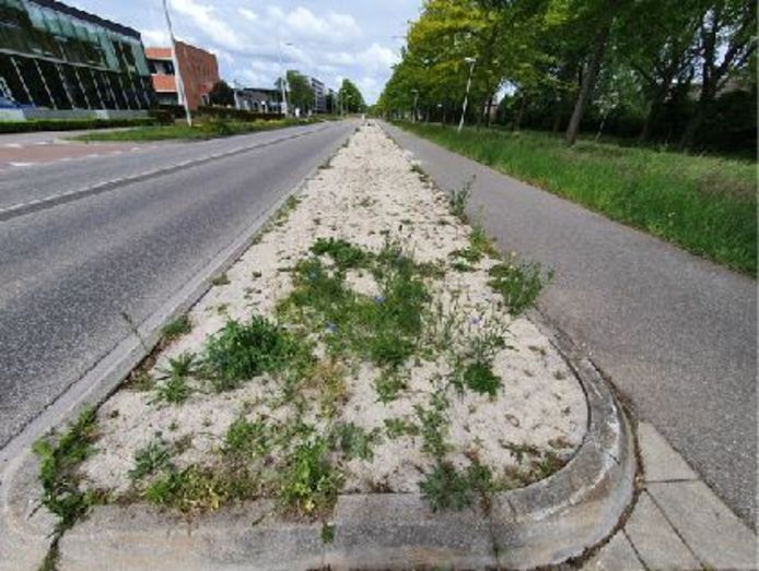 Kamper experimenteerde afgelopen jaren met groei van bloemen en planten langs de Europa-Allee in Kampen.