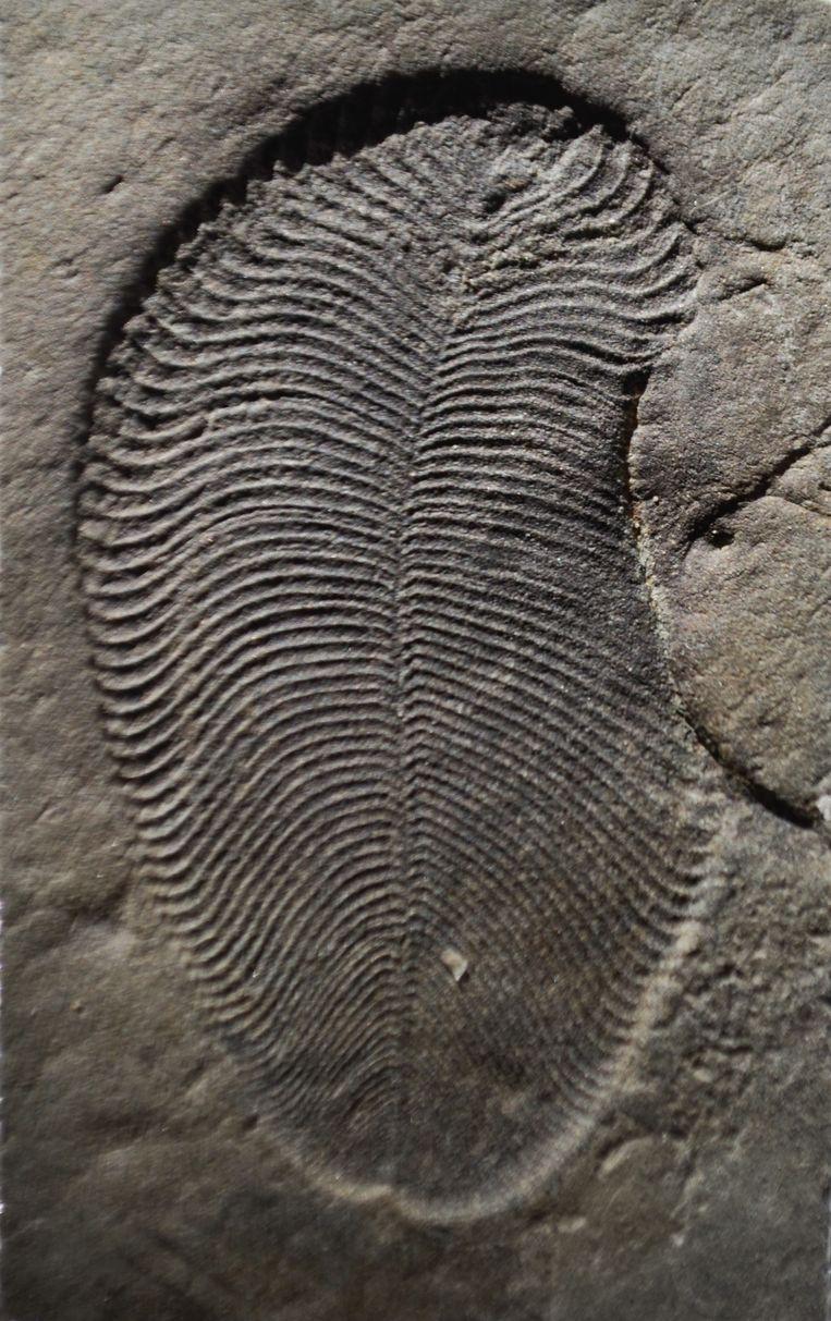 Een dickinsonia-fossiel uit Siberië. Beeld Ilya Bobrovskiy