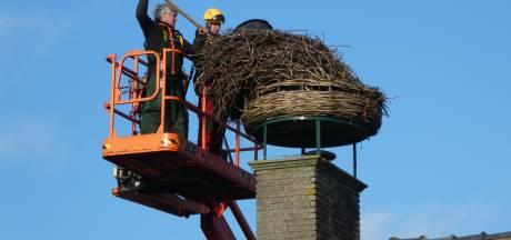 Beroemd Bredaas ooievaarsnest dreigt met kuikens en schoorsteen om te vallen, weggehaald voor tientallen spotters