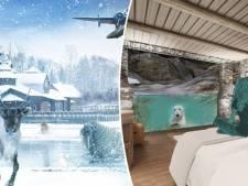 Dormir au milieu des ours polaires ou des tigres: la nouvelle offre de Pairi Daiza
