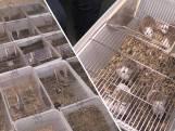 Meer dan duizend knaagdieren uit Frankrijk naar Den Haag