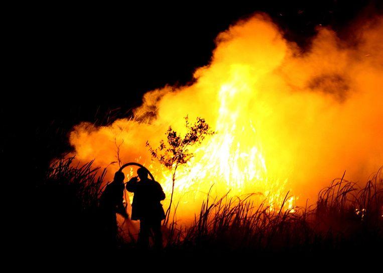 De bosbranden vorig najaar in Indonesië, waarvan de smog tot in Singapore de hemel verduisterde, werden onbedwingbaar door het uitblijven van regens. Een rechtstreeks gevolg van El Niño, al staken lokale planters en boeren de branden aan. Beeld ABDUL QODIR / AFP
