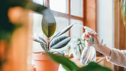 Fan van een urban jungle? Deze plantjes scoor je momenteel online met flinke korting (en je steunt er lokale webshops mee!)