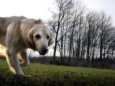 Bergeijk wijst gebieden aan om honden los te laten lopen