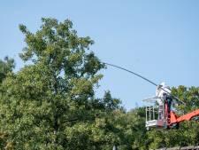 Bestrijder in hoogwerker spuit gif in hoornaarnest Veenendaal
