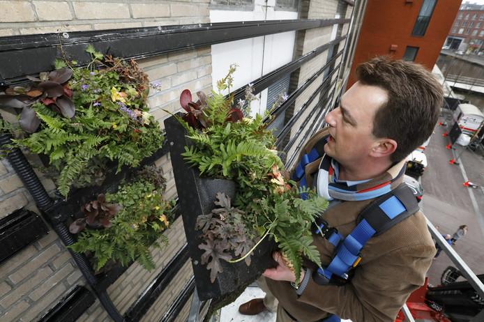De gemeente Breda bracht eind 2017 een wand van plantjes aan op de buitenkant van parkeergarage de Barones. Veel Brabantse steden maken werk van de vergroening van hun centrum.