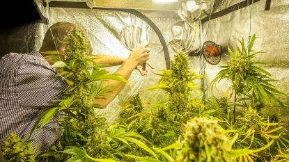Twee jaar voor uitbaten cannabisplantage