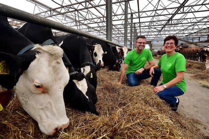 Kees en Anja Pijs in de vrijloopstal bij de koeien. De dieren gaan twee keer per dag naar buiten om op het weiland te grazen.