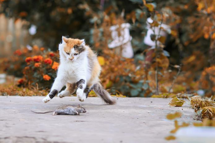Je poes of kat buiten laten lopen is illegaal. Dat betogen twee Tilburgse hoogleraren. Volgens hen is een kat buiten laten lopen zonder toezicht in strijd met Europese regels.