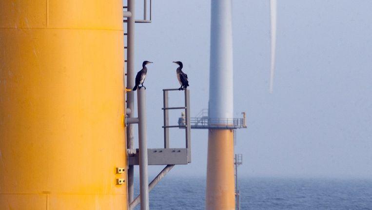 Aalscholvers in het windmolenpark in Egmond. Ze rusten er en drogen hun vleugels FOTO © IMARES Beeld