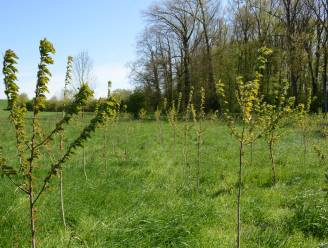 Raspaillebos in Galmaarden wordt uitgebreid met 0.62 hectare, en jij kan helpen!