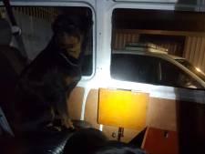 Honden zonder baasje gevonden in Woerden