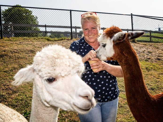 """Petra Kors met de alpaca's Josephine en Lodewijk die twee jaar geleden onder grote belangstelling in het huwelijk traden: ,,Ze hebben veel fans."""""""