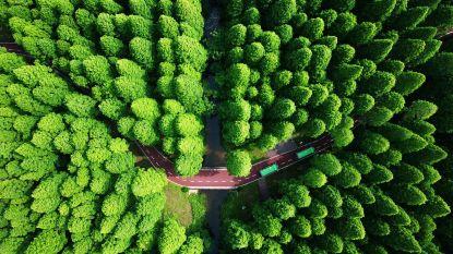 Onderzoek: wereldwijd herstel van bossen zou genoeg zijn om opwarming van de aarde te keren
