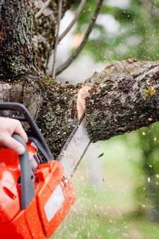 Bomen sportcomplex Heerde nog niet gekapt