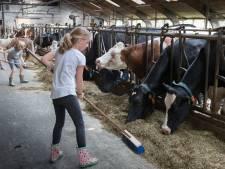 Je eigen koe bij Heetense grondulow
