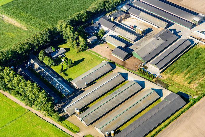 Een varkensboerderij bij Deurne, in De Peel. Foto ter illustratie