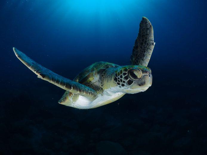 Een foto van René Weterings van een schildpad.