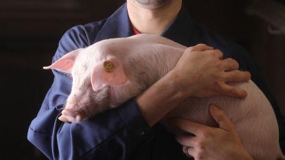 """""""Animal Rights wil boeren kapotmaken. Niet met mij"""""""