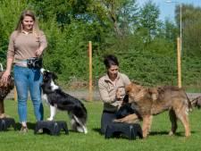 Stewardess Kim ziet droom vervliegen: Ermelose hondenschool moet weg
