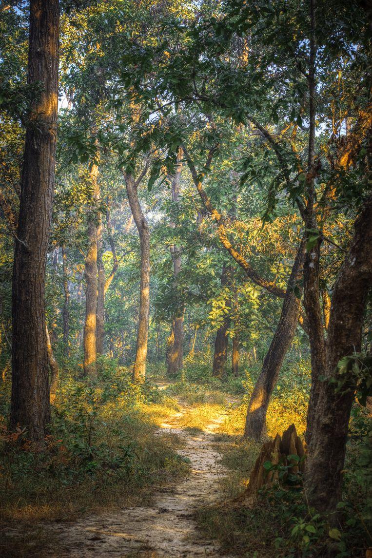 Chitwan National Park Beeld COLOURBOX