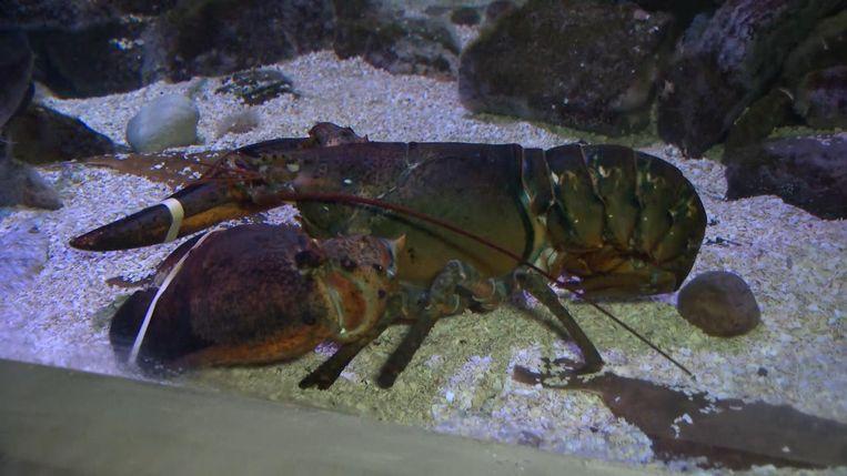 Wesley zou in Sea Life Blankenberge van zijn pensioen genieten.