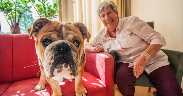 Hond harry verovert harten van ouderen gouda for Begeleid wonen woerden