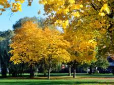 Vallende bladeren: eerst wegen en fietspaden in Hengelo