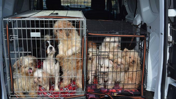 57 honden leven onverzorgd tussen uitwerpselen