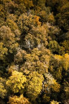 Veel respons op Alphense bomenenquête