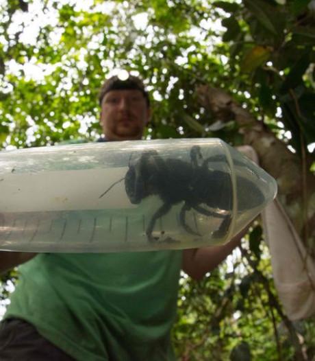 Biologen herontdekken 'uitgestorven' vliegende bulldog
