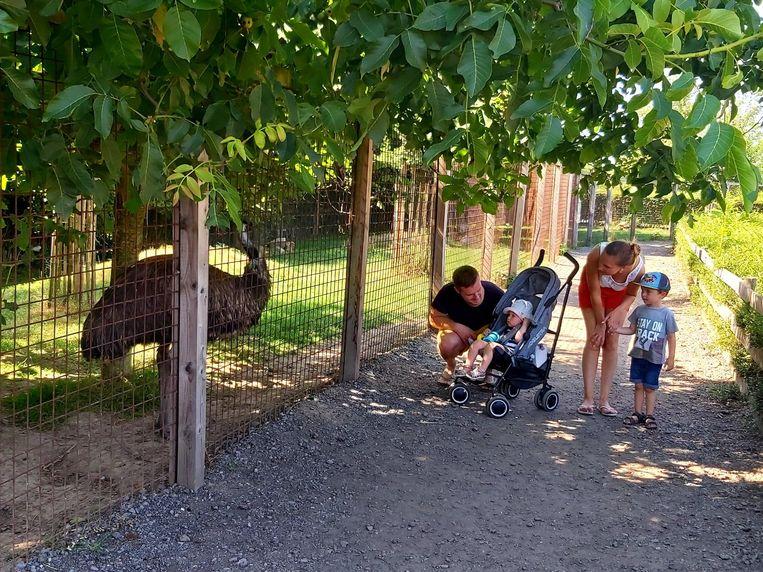 Verkoelende ijsjes voor dieren in De Zonnegloed