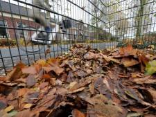 Afvaldebacle Bronckhorst: bladkorf blijft en oud papier gewoon aan huis opgehaald