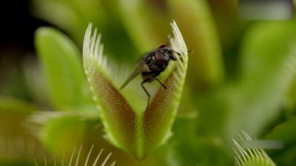 Fotografe zet camera bij vleesetende plant. Het resultaat is prachtig maar gruwelijk