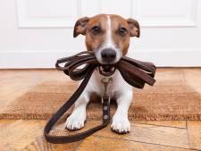 Zwijndrechtse partij geeft advies aan hondenbezitters: Vlucht naar Dordrecht