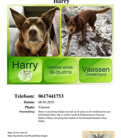 Baasje hond Harry met epilepsie uit Vaassen in tranen: 'Hij is verdronken'