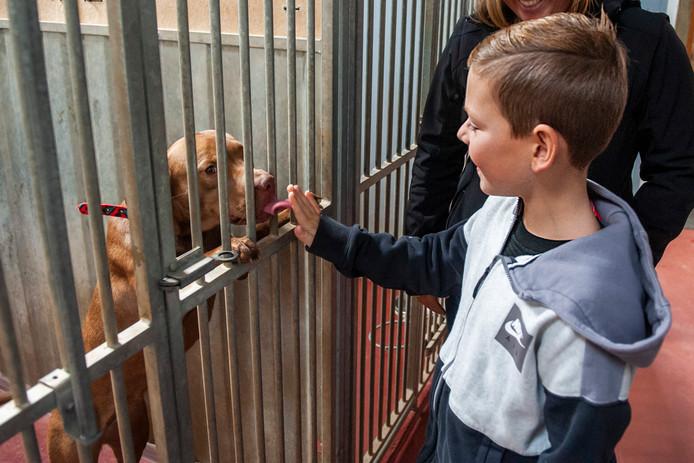 Bruchem. Hond Steffi krijgt alle aandacht van de 9-jarige Rico tijdens de open dag van het dierenasiel in Bruchem.