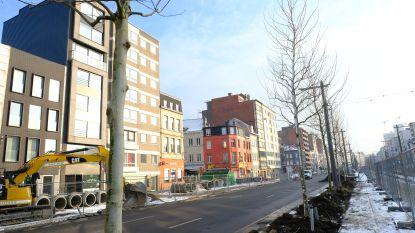 Italië- en Frankrijklei kleuren weer beetje groener: eerste van 540 nieuwe platanen geplant