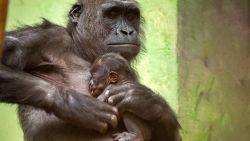 Een week goed nieuws: babygeluk in de Zoo en andere verhalen die je blij maken