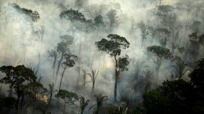 Brazilië aanvaardt nu toch geld uit buitenland om Amazonewoud te beschermen