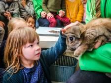 """Schattig! Kleuters van Sparrenhof mogen konijntjes van kinderboerderij twee maanden vertroetelen: """"Zo leren ze omgaan met huisdieren"""""""
