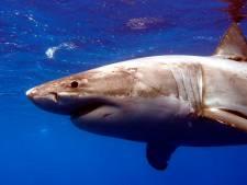 Haai doodt man voor de kust van Hawaï