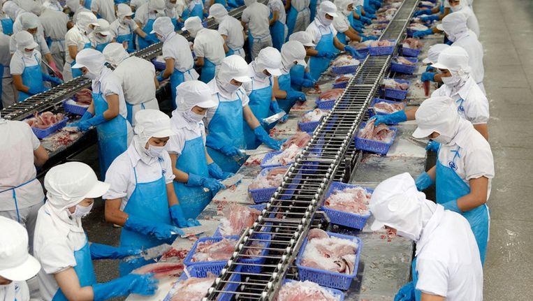 In een Vietnamese viskwekerij wordt pangasius schoongemaakt. Beeld Henk Riswick