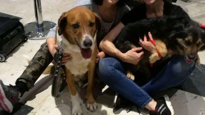 Moeder en dochter vrijgesproken voor misbruik geld vzw SOS Straathonden Turkije