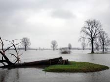 Redden wat er te redden valt bij bakenbomen langs de Maas