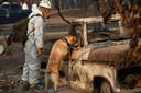 Reddingswerkers in Californië zoeken op 16 november naar menselijke restanten in een volledig uitgebrande auto