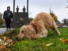 Hondendrollen opruimen: baasjes in Veenendaal hebben er 'schijt' aan, maar handhaven is niet te doen