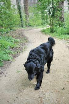 Hond heerst in Louter Bloemen