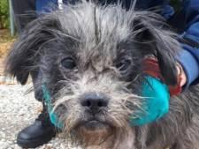 Gedumpt hondje in Gronings Dorp in zo'n slechte conditie dat hij overlijdt
