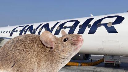 Nederlands gezin krijgt geld terug na muizen in vliegtuig